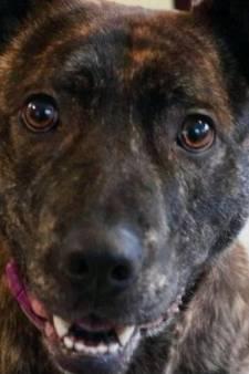 Eenzaamste hond van Groot-Brittannië heeft eindelijk een thuis