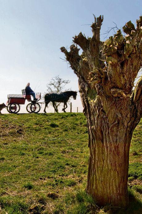 Bescherm de fruitbomen en schietwilgen: welke bomen willen we behouden in de Hoeksche Waard?