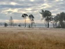 Lezersbrieven | Heide wordt door stikstof omgezet in 'grasvalt' | Laat mensen met schulden niet méér betalen dan rente
