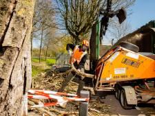 Beuningen start met kap van 107 bomen: 'Wachten tot na het broedseizoen vinden we niet verantwoord'