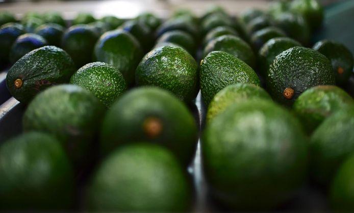 Avocado's zijn wereldwijd heel populair, ook Nederlandse consumenten zijn er dol op.