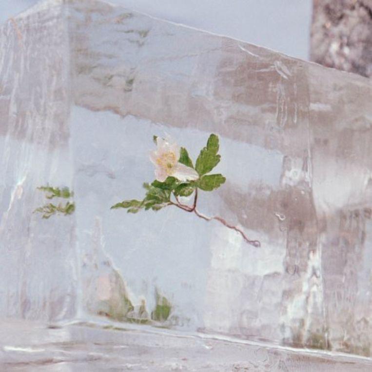 EFTERKLANG Windflowers Beeld rv