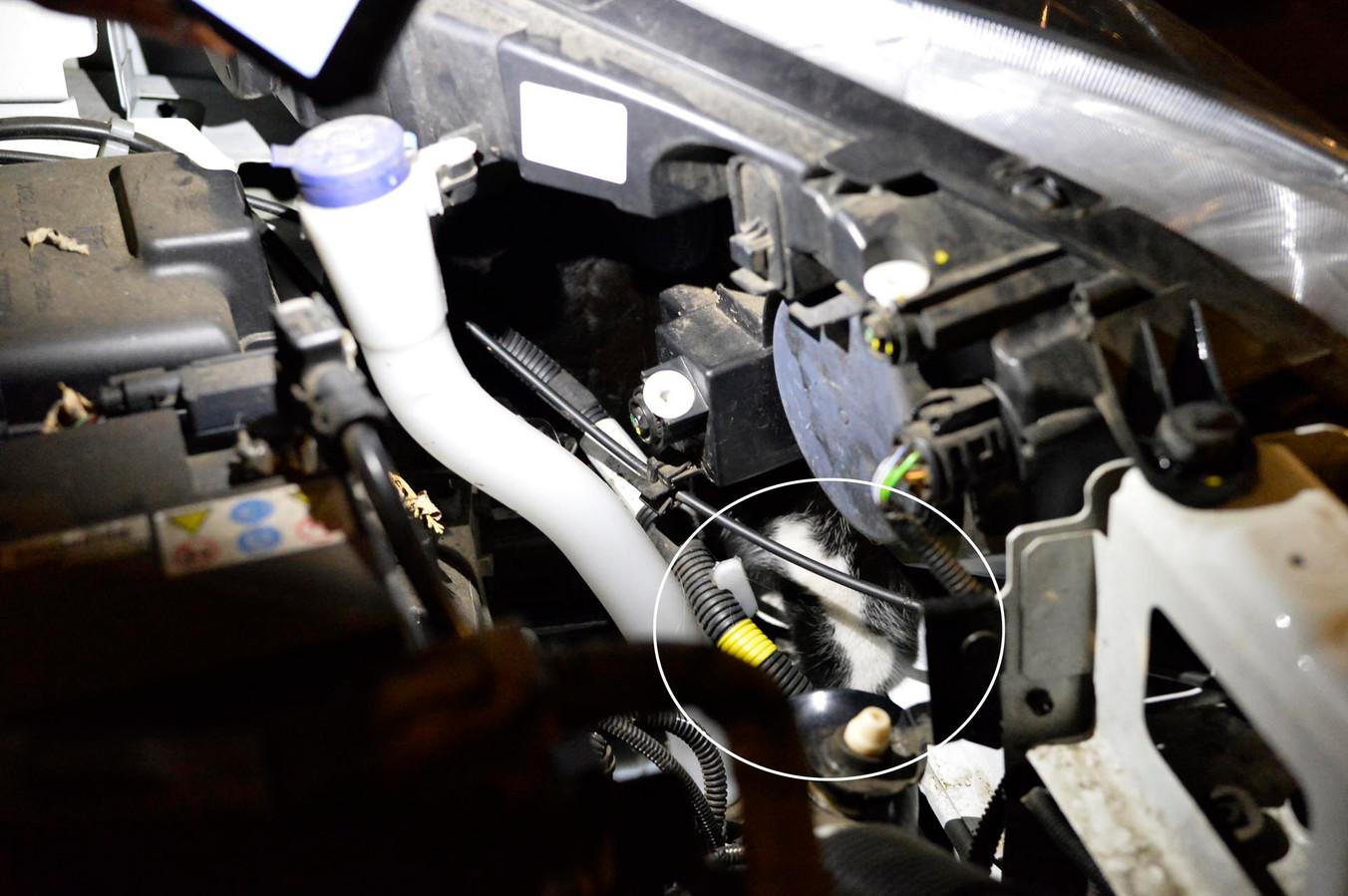 Het katje zat klem onder de motorkap van een auto.