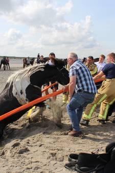 Paard bevrijd uit drijfzand