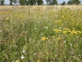 Watergroep en Natuurpunt werken samen voor natuurbeheer op waterwinningsgebied Roosenheide