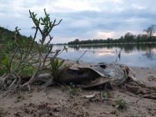 Bijzondere foto: vissen verslikken zich in elkaar in Gelders natuurgebied