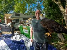 Het hing al jaren in de lucht, maar de roofvogels van Falconcrest in Eindhoven gaan nu echt verhuizen