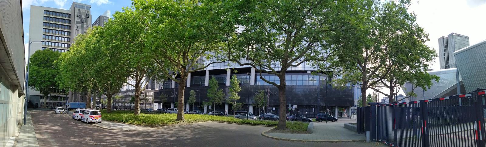Platanen bij Rotterdam Centraal