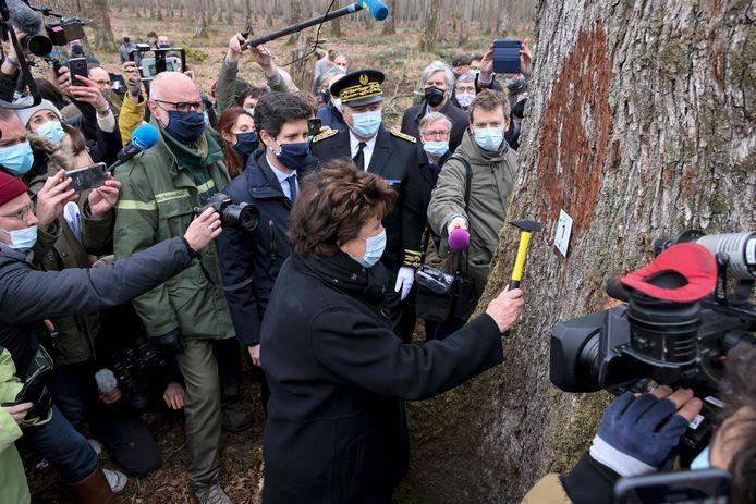 """La ministre de la Culture Roselyne Bachelot a planté un écriteau sur le tronc, avec la mention """"arbre numéro un""""."""