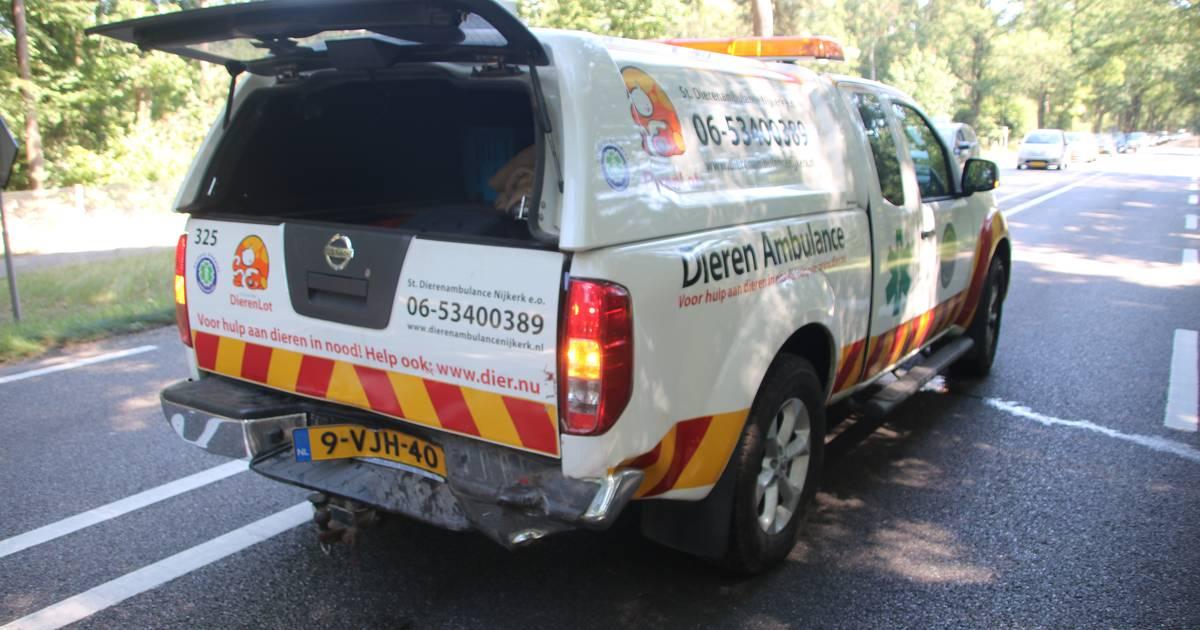 Medewerker Dieren Ambulance zwaargewond na botsing bij Ermelo: 'Ze remden niet en reden vol op ons in'.