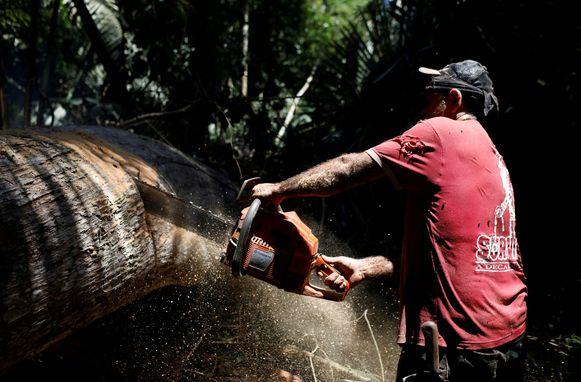 Een man zaagt een boom in stukken in de Amazone in Brazilië.