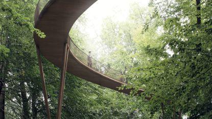 Wandelen tussen de boomkruinen, op 20 meter hoogte: vanaf volgend jaar in het Zoniënwoud