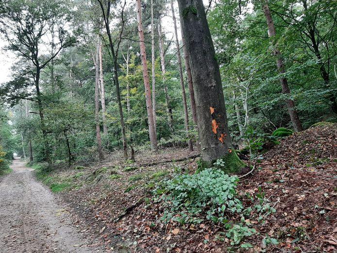 De plek in het bos waar de motorrijder verongelukte in het bos bij Braamt.