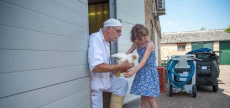 Doehetzelfkip: gaat de familie de kippen slachten of niet?