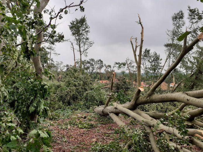 De storm heeft stevig toegeslagen in het Lombokbos