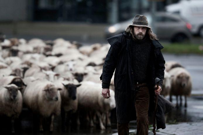 Herder Roelof Kuiper in Winterswijk