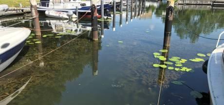 Waterschap haalt exotische plant 'cabomba' weg in Hardinxveld