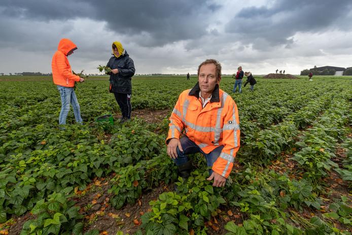 Boer Klaas Meine de Olde geeft z'n Sperziebonen weg. Het land is te nat voor de machines.