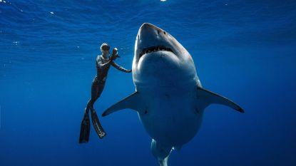 'Jaws' is er niets tegen
