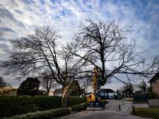 De oude beuk bij het kerkhof van Someren-Eind is niet meer