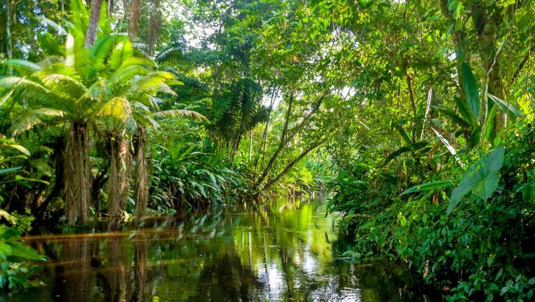 Weer meer regenwoud verdween uit Brazilië. Beeld thinkstock