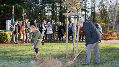 Vredesboom geplant op kerkhof van Massemen