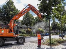 Noodkap in Zwolle levert verbaasde gezichten op: 'Bomen belangrijk onderdeel van de straat'
