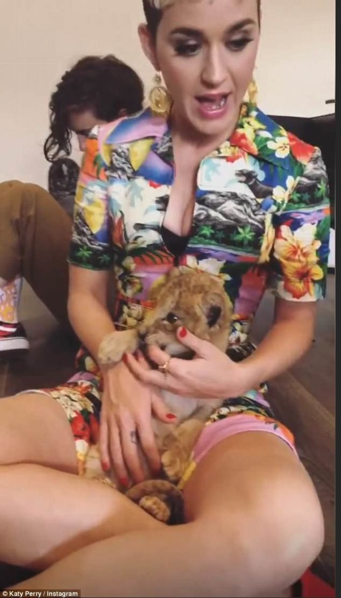 Katy Perry knuffelt met leeuwtjes.