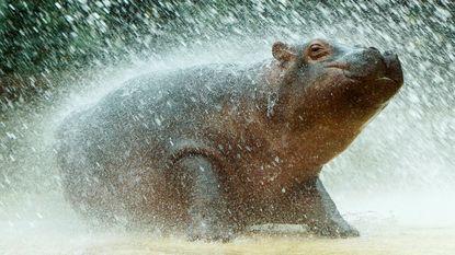 Honduras neemt dierentuin van criminelen in beslag