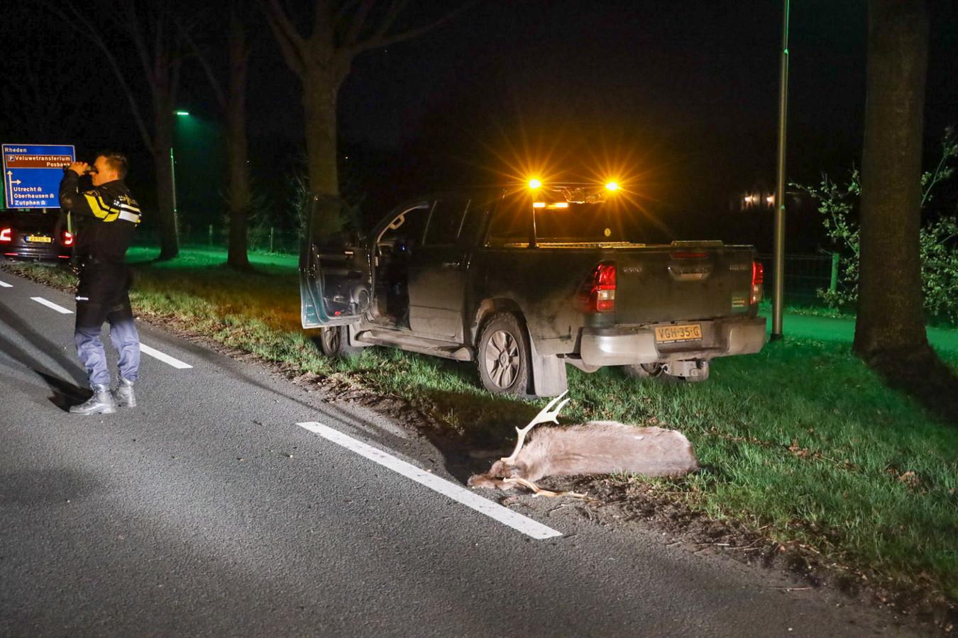 Het eerste damhert werd donderdagnacht doodgereden, het tweede wist te ontkomen (maar de auto was total loss).