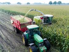 Criminelen saboteren maïsoogst van boeren om schuur te gebruiken voor drugsproductie