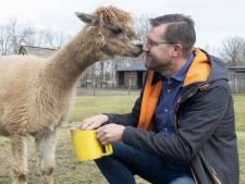 Ter adoptie aangeboden: alpaca's, varkens, schapen en nog veel meer dieren