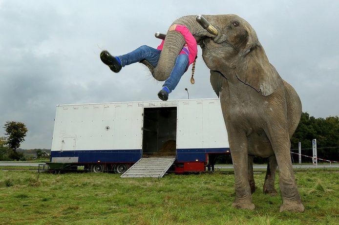 Winnaar in de categorie Human Interest: Olifant Buba mag door een nieuwe wet niet meer optreden. In Wageningen speelt de olifant met verzorgster Sharon Freiwald (10).