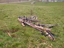 Vandalisme? Nee, boompjes in park Vijverberg moesten echt weg