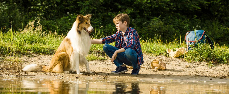 De nieuwste Lassie, met zijn menselijke filmvriend Flo (Nico Marischka). Beeld