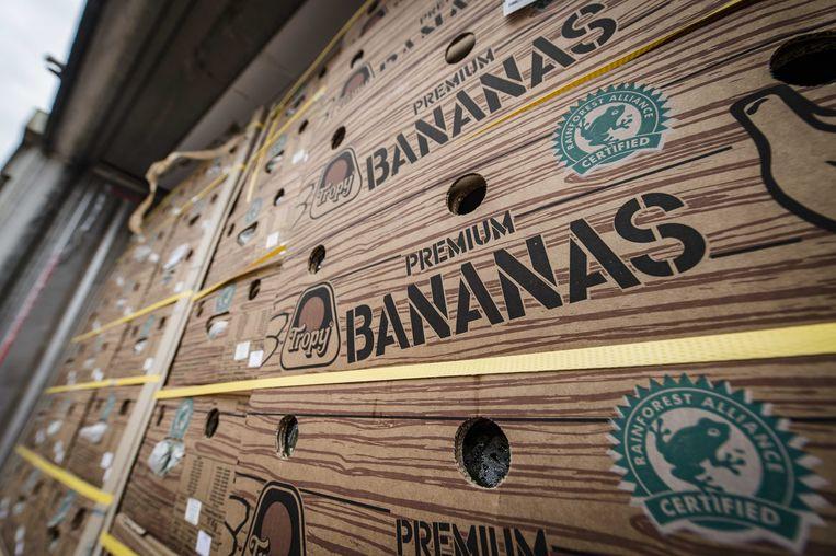 Cocaïne wordt geregeld de haven van Antwerpen binnengesmokkeld via bananendozen. Beeld ANP
