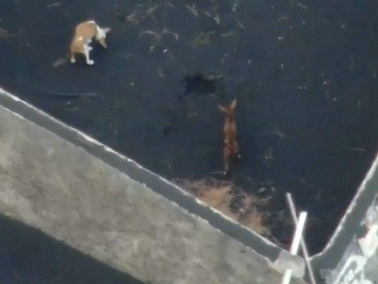 Drones droppen voedsel om honden tussen lava te redden