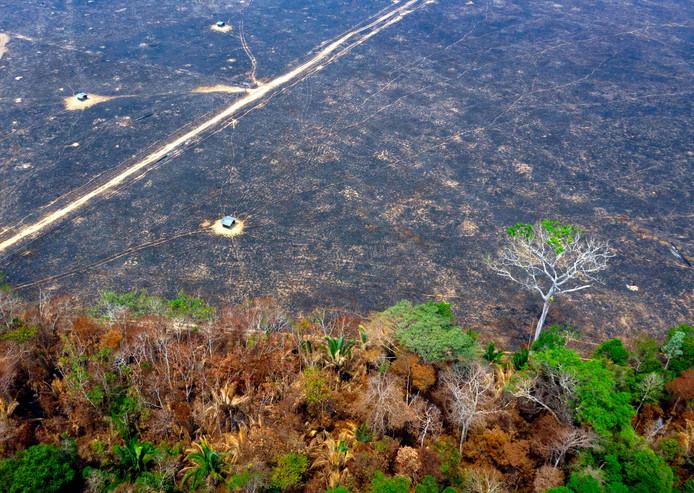 Een luchtfoto van het verwoeste bos bij Porto Velho, in de staat Rondonia.