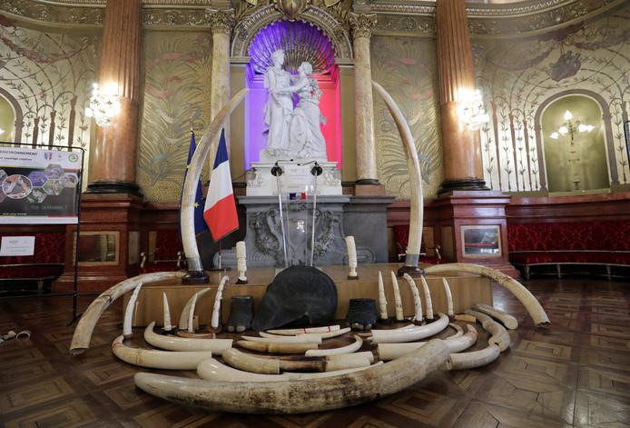 In Frankrijk in beslag genomen ivoor wordt voor de vernietiging uitgestald in Nice.