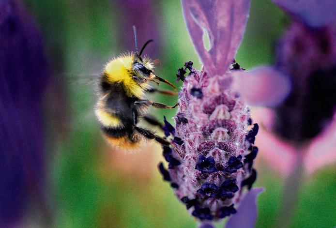 Het prachtlint moet onder meer de bijen ondersteunen.