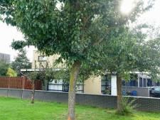 Gemeente IJsselstein gaat vijftien perenbomen kappen vanwege bomenziekte