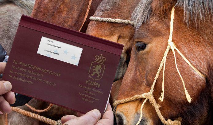 Paarden en een paardenpaspoort, foto ter illustratie.