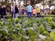 Op zomeravonden kennismaken met boerenleven: 'Neem een kijkje in de wei en stal'