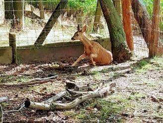Wildlife Taxi Teams zoeken vrijwillige telefonisten om dieren in nood te redden