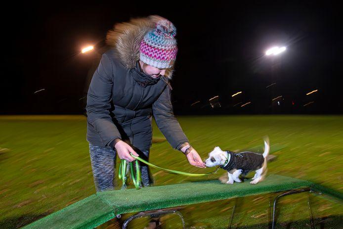 Puppycursus bij hondenschool Tilburg. Baasje Nina neemt met haar hondje Lumi een hindernis.