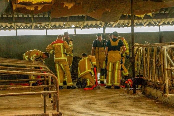 Brandweerlieden bevrijden kitten uit gierput in Liessel