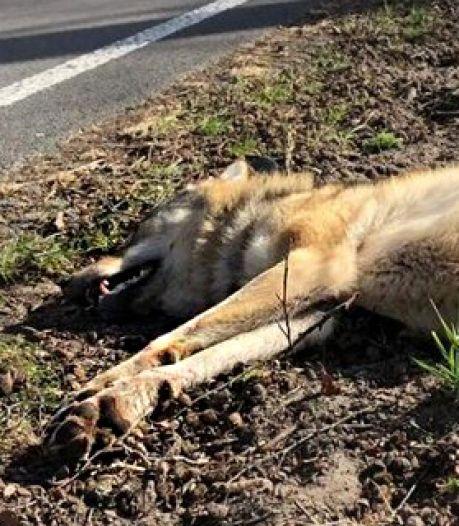 Campagne: voor de wolf is het te laat, maar aso-gedrag in de natuur moet stoppen