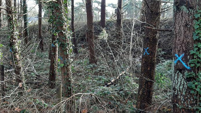 Meer dan 120 bomen en boompjes langs de Ceintuurbaan zijn voorzien van een blauw kruis of stip.