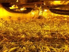 'Zeer gevaarlijke' wietplantage gevonden in appartement in Hattem