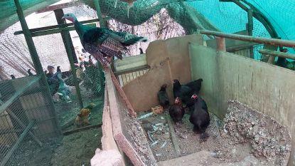 450 verwaarloosde dieren in beslag genomen